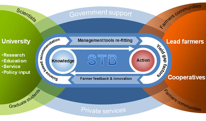 Organization service system of STB