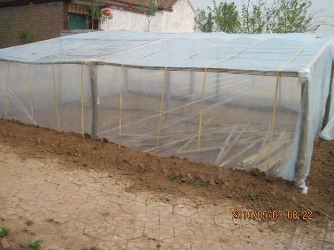 The greenhouse for watermelon grafting in STB
